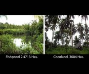 Cocoland & Fish pond/TDN-251/255