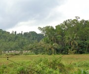 Cocoland/TCT-161-2012000083/TDN-00255